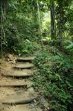 Tropischer Dschungel-Wanderung-Pfad Lizenzfreie Stockfotos