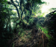 Tropischer Dschungelwald der Fantasie in den surrealen Farben Lizenzfreies Stockbild