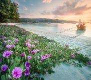 Tropischer Erholungsort, Palme und Küste von Thailand setzen auf den Strand lizenzfreie stockbilder
