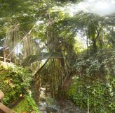 Tropischer exotischer Regen heiliger Affe-Walddschungel auf Asiaten Bali I Lizenzfreie Stockfotografie