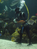 Tropischer Fisch-Taucher Lizenzfreies Stockbild