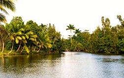 Tropischer Fluss Stockfotos