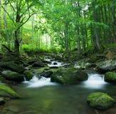 Tropischer Fluss Lizenzfreies Stockfoto