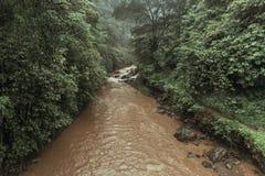 Tropischer Fluss mit Palmen auf beiden Ufern Lizenzfreie Stockbilder