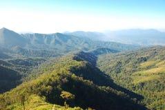 Tropischer Forest Hills Stockfotografie