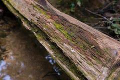 Tropischer Forest Trees Texture Stockfotografie