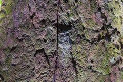 Tropischer Forest Trees Texture Lizenzfreie Stockfotos