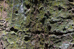 Tropischer Forest Trees Texture Lizenzfreies Stockfoto