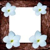 Tropischer fragipani Blumen- und Holzrahmen Stockfotos