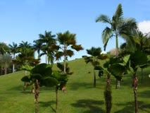Tropischer Garten Stockfotos
