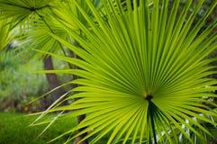 Tropischer Garten Lizenzfreie Stockfotografie