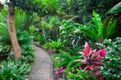 Tropischer Garten Stockbilder