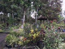 Tropischer Garten Lizenzfreie Stockfotos