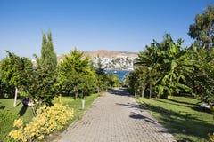 Tropischer Garten mit grünen Palmen Lizenzfreies Stockbild