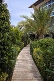 Tropischer Garten mit grünen Palmen Lizenzfreies Stockfoto