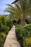 Tropischer Garten mit grünen Palmen Lizenzfreie Stockbilder