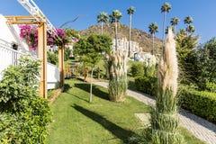 Tropischer Garten mit Palmen und Bouganvillablumen Lizenzfreie Stockfotos