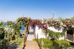 Tropischer Garten mit Palmen und Bouganvillablumen Stockbild