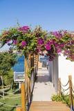 Tropischer Garten mit Palmen und Bouganvillablumen Stockfotografie