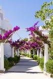 Tropischer Garten mit Palmen und Bouganvillablumen Lizenzfreie Stockfotografie