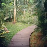 Tropischer Garten-Weg, Ilhabela, Brasilien Stockfoto