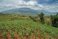 Tropischer Gipfel mit Getreidefeldern stockfoto