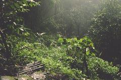Tropischer grüner Dschungel mit dem Sonnenstrahl, der in Thailand glänzt Lizenzfreie Stockfotos