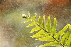 Tropischer grüner Farn mit Wasserspray Stockfotografie