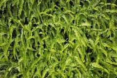 Tropischer grüner Farnhintergrund Stockfotos