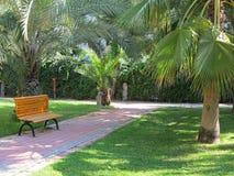 Tropischer grüner Park mit Palmen und Bank Stockfoto