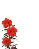 Tropischer Hibiscus blüht Ecke Lizenzfreie Stockbilder