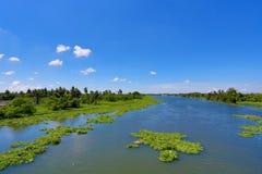 Tropischer Himmel und Fluss mit sich hin- und herbewegender Wasserhyazinthe Stockfotografie