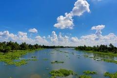Tropischer Himmel und Fluss mit sich hin- und herbewegender Wasserhyazinthe Stockbild