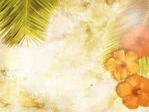 Tropischer Hintergrund Stockfotos