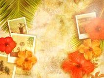 Tropischer Hintergrund Stockfotografie