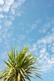 Tropischer Hintergrund Stockfoto
