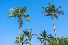 Tropischer Hintergrund der KokosnussPalme lizenzfreie stockfotografie