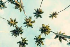 Tropischer Hintergrund des Sommers mit Kokosnusspalmen auf blauem Himmel Getontes Bild lizenzfreie stockfotografie