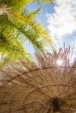 Tropischer Hintergrund von Palmen über einem blauen Himmel Lizenzfreie Stockfotos