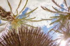 Tropischer Hintergrund von Palmen über einem blauen Himmel Lizenzfreie Stockfotografie