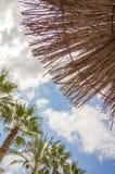 Tropischer Hintergrund von Palmen über einem blauen Himmel Lizenzfreies Stockbild