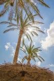 Tropischer Hintergrund von Palmen über einem blauen Himmel Lizenzfreies Stockfoto