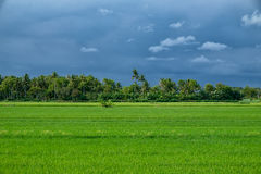 Tropischer Horizont vor Regen Lizenzfreie Stockbilder