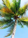 Tropischer Inselstrand Lizenzfreies Stockfoto