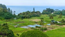 Tropischer Küsten-Bauernhof Stockfoto