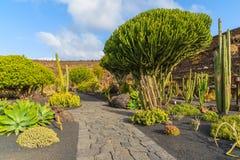 Tropischer Kaktusgarten Stockfotos