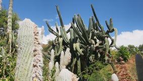 Tropischer Kaktusgarten lizenzfreies stockbild