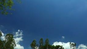 Tropischer Klima-Time Lapse-Himmel mit Treetops stock footage