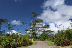 Tropischer McKenzie Park-Eingang Hawaiis Stockfotografie