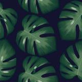 Tropischer Musterhintergrund der Palmblätter stockfotos